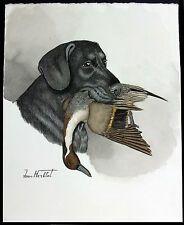 "Jean Herblet French 17""x13"" Original Watercolor, Black Labrador, Pintail"