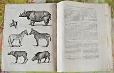 1784 Ancienne art print Gravure Estampes EO Rhinocéros,Zèbre,Sanglier,Babiroussa