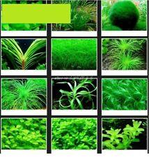 30x Aquarium Plantes Graines Mix Léger Semis nouveauté rare Semences #206