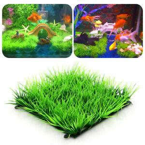 Green  Plastic  Water Grass  Plant  Lawn  Fish  Tank  Landscape  Aquarium  Home