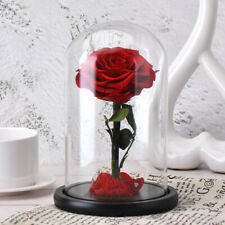 Eternal Red Rose Beauty And The Beast Enchanted Flower Glass Dome Light As Gifts