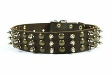 """New listing Dean and Tyler """"Tolerance"""" Dog Collar with Beautiful Brass Stud and Nickel Sp."""