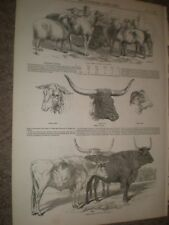 Cattle of Germany Spain England and Lincolnshire Sheep 1847 prints ref AW