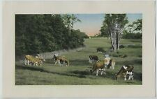 Vintage 1930's-1940's Guernsey Dairy Cows Print Grazing in Farm field