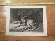 Sir Edwin Landseer Antique Engraving Art Sleeping Bloodhound