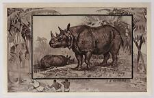 1909 Mint Picture postcard depicting African Rhinoceros