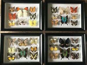 8 Framed real butterflies two double insects wall decor curio gift taxidermy