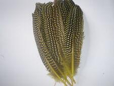 lot de 10 plumes pintade 18 cm jaune