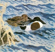 Mounted Print. A Pair of Shovelers.  Charles Tunnicliffe