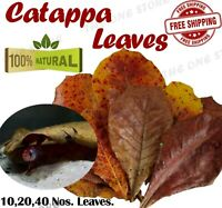 Catappa Indian Almond leaves Dried ketapang leaf shrimp betta fish aquarium care
