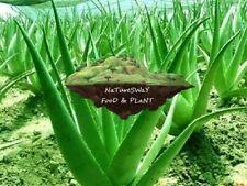 NaTureS WaY Medicinal Barbadensis Aloe Vera, Organic, Skin, Hair 32 oz
