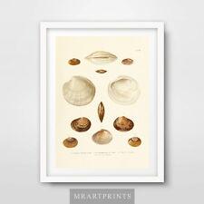 SEASIDE VINTAGE SCIENTIFIC SHELLS Art Print Poster Home Decor Room Illustrations