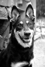 Vietnam 1970 - Guard Dog Chu Lai