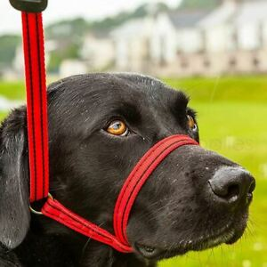 Gencon All in One Dog Headcollar and Lead Stop Anti Pull Soft Fits All Dogs