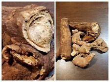 MANDRAKE ROOT (Mandragora officinarum) EUROPEAN ORGANIC  1/2 OZ CUT PIECES