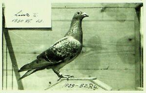 HUNGARY 1930 3v ON PIGEON BIRD EXPRESS REGD PPC FROM BUDAPEST TO AUSTRIA