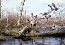 "Backwater Woodies By Richard Plasschaert Duck Pond Scene  Print   10"" x 7"""