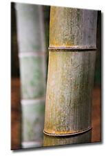 Leinwand Natur Bild Grün Abstrakt Warm Bambus Alt Deko