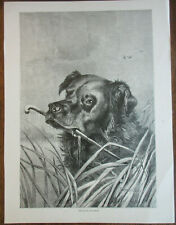 NEWFOUNDLAND DOG IN LAKE ANTIQUE ART PRINT HARRISON WEIR