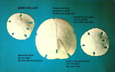 Postcard Sand Dollars Panama City Florida Chrome Unused