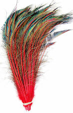 "25 Pcs DYED PEACOCK SWORDS - RED Feathers 10-15"" Costume/Hats/Bridal/Halloween"
