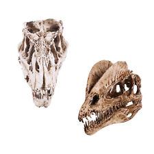 2x Resin Dinosaur Skull Model T-rex And Dilophosaurus Skeleton Figurine
