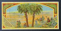Ancienne étiquette SOCIETE ANONYME DE BONNETS TURCS oasis datte label