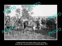 OLD POSTCARD SIZE MILITARY PHOTO WWI GALLIPOLI THE INDIAN MULE CORPS c1915