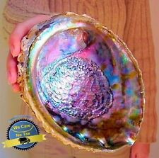 Large Paua Seashell Green Abalone Smudging Beach House Decor Natural Rainbow Big