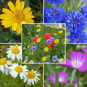 Wild Flower Seed Mix Annual Meadow 100% Wildflower Mixed for Bees Butterflies