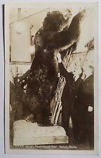 KODIAK AK World's Record Kodiak Bear c1950 REAL PHOTO POSTCARD Kodiak Alaska