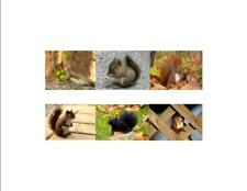 Squirrels of the World Custom Notecards ~ 6-Pack (Blank) by Gifted Pet Creations