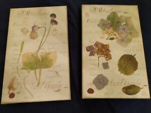LOT Giclee Print Hydrangea Sweet Pea Floral Botanical Wall Decor Cottagecore Vtg