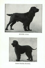 1947 Complete Dog Book - Spaniel and Irish Water Spaniel on one side and Span.