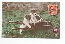 Animal CHIEN Chiens DOG dogs 10 carte fantaisie 3 chiots brouette