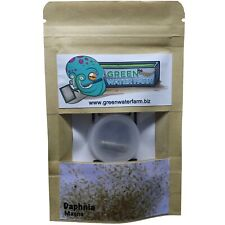 DAPHNIA MAGNA EGGS LIVE FISH FOOD ONE CAPSULE FOR FEED BETTA GUPPY KILLIFISH