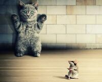Funny Cat And Mouse - Animals Wild Nature Wall Art Poster / Canvas Pictures