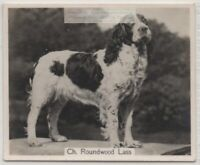 English Springer Spaniel 1930s Champion  Dog Breed Canine Pet Ad Trade Card