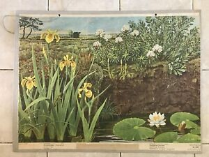Original vintage pull down school chart Protected plants, water moor