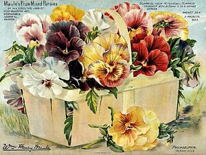 Botanical Pansies flower Poster Print wall hangings home decor A4