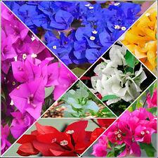 100pc Bougainvillea Bonsai Seeds Leaves Flower Bonsai Yard Garden&Outdoor Living