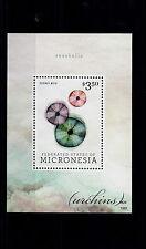 Micronesia 2013 MNH Seashells 1v S/S Urchins Echinus Melo Marine Shells