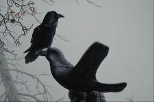 591001 Common Raven A4 Photo Print