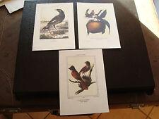 REUNION - 3 cartes postales oiseaux (cy54)
