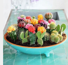 100 pcs mix cactus seeds Rare succulents plant for home garden decoration
