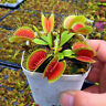 1 Bag Plant Gardening Venus Fly Trap Carnivorous Plant Seeds Garden