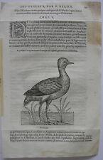 Triel (Burhinus oedicnemus) Regenpfeif Orig Holzschnitt 1555 Belon Ornithologie