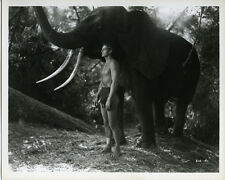 Johnny Weissmuller full length as Tarzan standing by elephant 8x10 photo