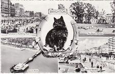 Black Cat Multiview, BRIGHTON, Sussex RP