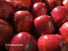 Apfelbaum 'Red Devil' - Schorfresistent -  winterharte Pflanze 160-180cm im Topf